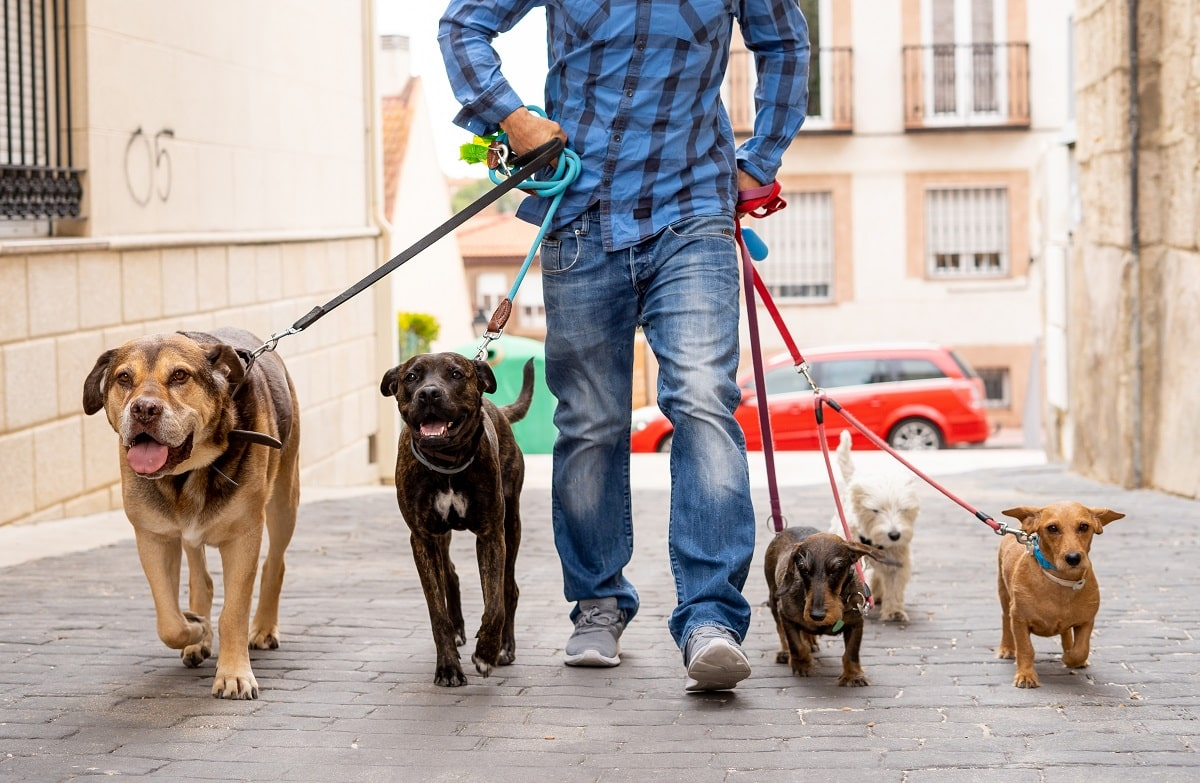 Part-time-Jobs-in-Canada-Dog-Walker