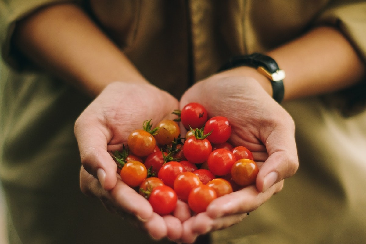 close up of local farmer holding cherry tomatoes in hands